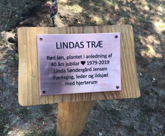 Lindas-Træ-live